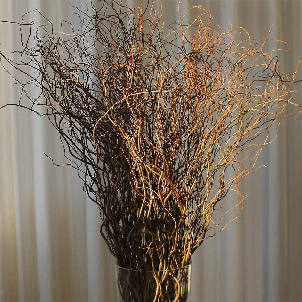 Curly Willow Branches Green Bulk Fresh