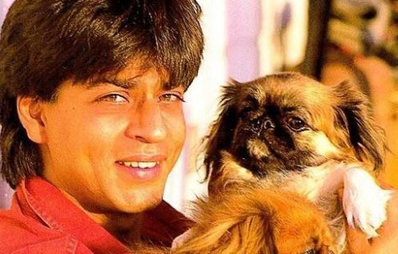 Image result for aamir khan puppy
