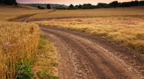 Mazy Road