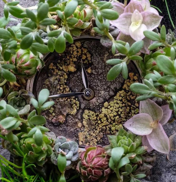 Die Moser Nature Watch: H. Moser & Cie stellt sich ökologischen Herausforderungen