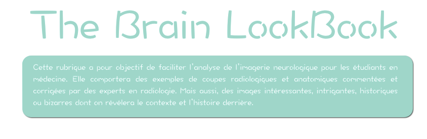 the brain look book