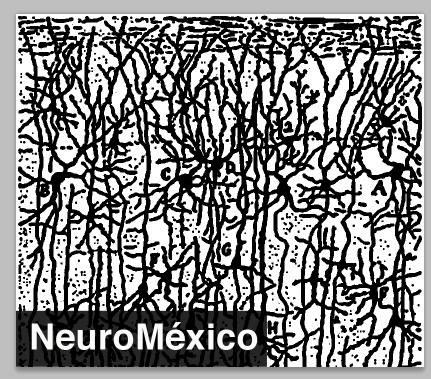 NeuroCápsulas: Células Madre en Neurología