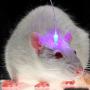 Optogenética, controlando el cerebro con luz.