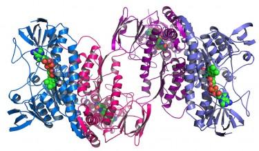 protein folding image