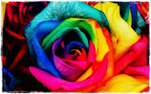 Il significato di omosessualità