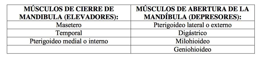 Descripción de los músculos craneo-mandibulares que forman parte del proceso de masticación