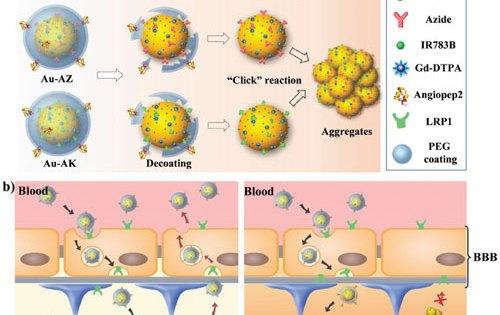 Guiding brain tumor surgery with nanoprobes