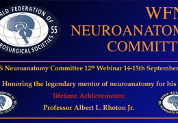 Tuesday, Wed, 12 pm GMT, WFNS Neurosurgical Anatomy Webinar #12, at Noon EST