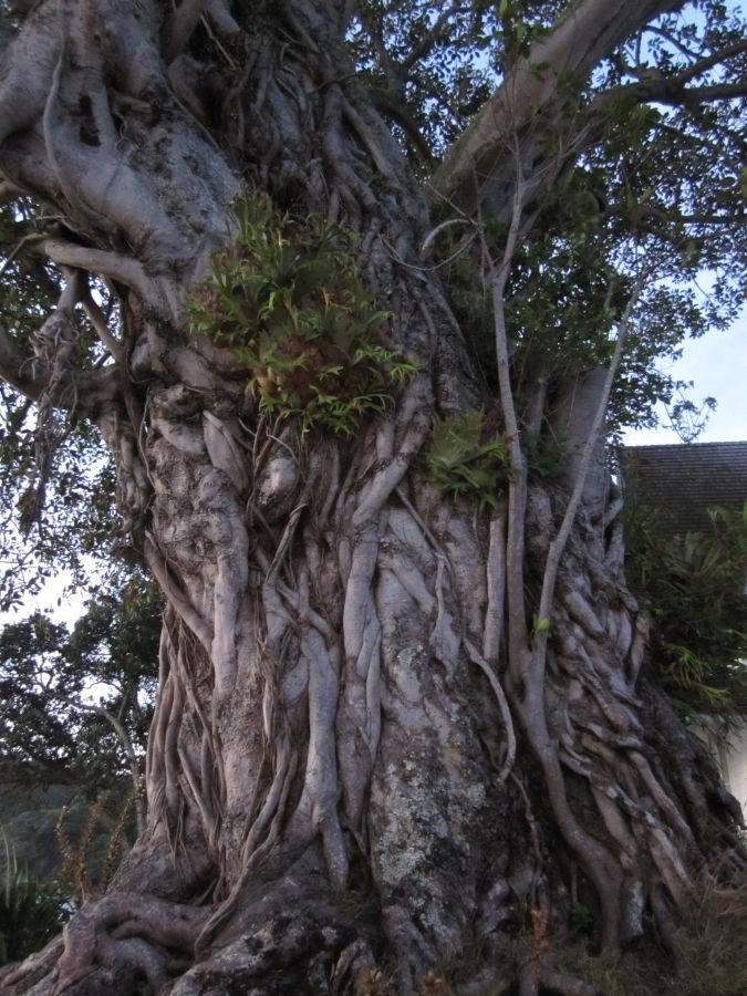 Bäume am Straßenrand von Russell
