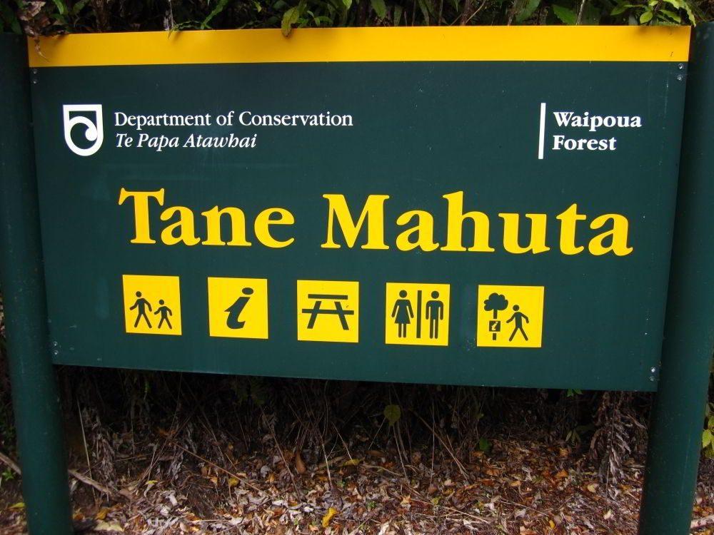 Hinweisschild zum Kauri Tree Tane Mahuta