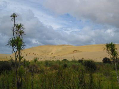 Te Paki Dünen in der Nähe von Cape Reinga