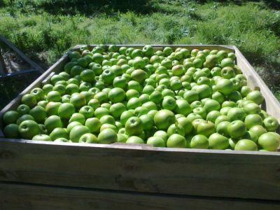 Neuseelandändische Äpfel