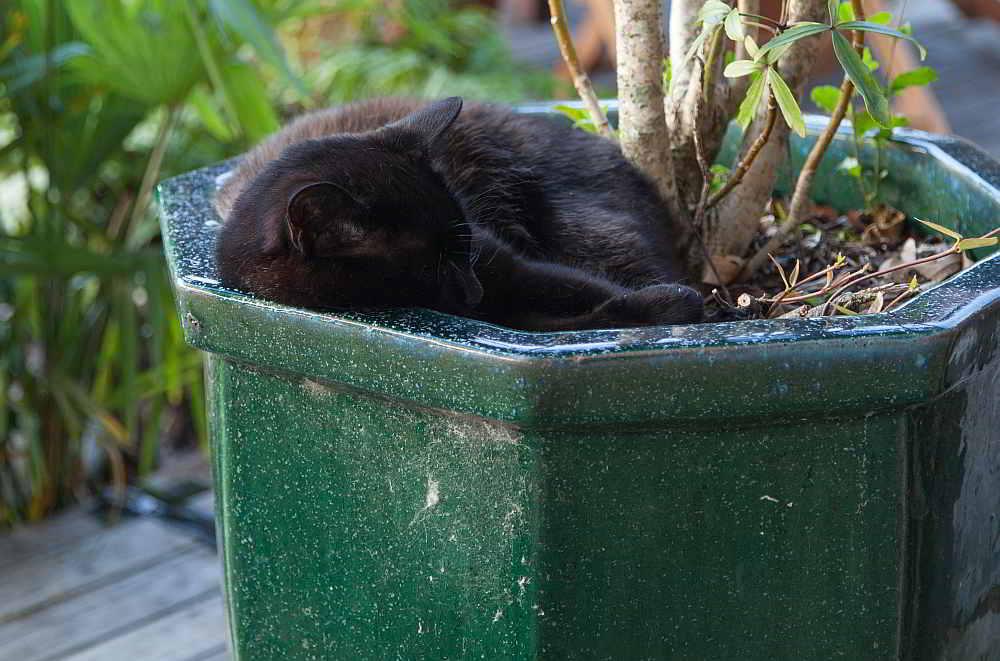 Katzenleben