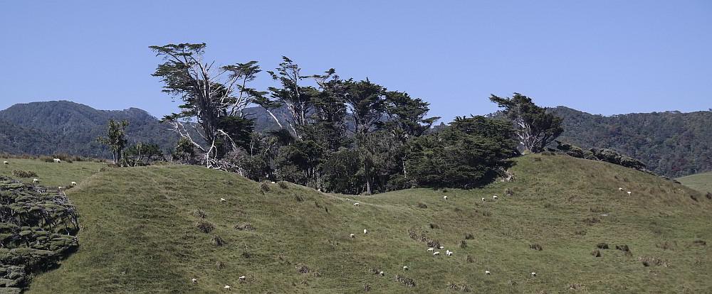 Bäume kuscheln sich in einer Senke