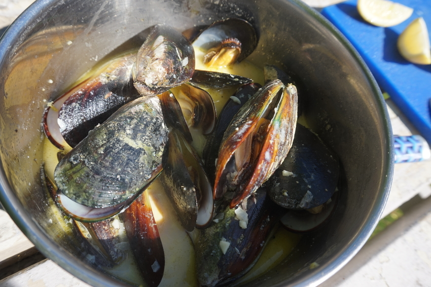Green Lipped Mussels - mmhhhh