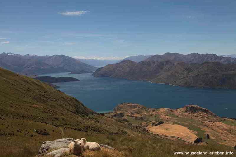 Der schönste Platz hoch über Lake Wanaka ist schon besetzt!