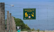 Verhaltensregeln in Bezug auf Tiersichtung auf Neuseeland