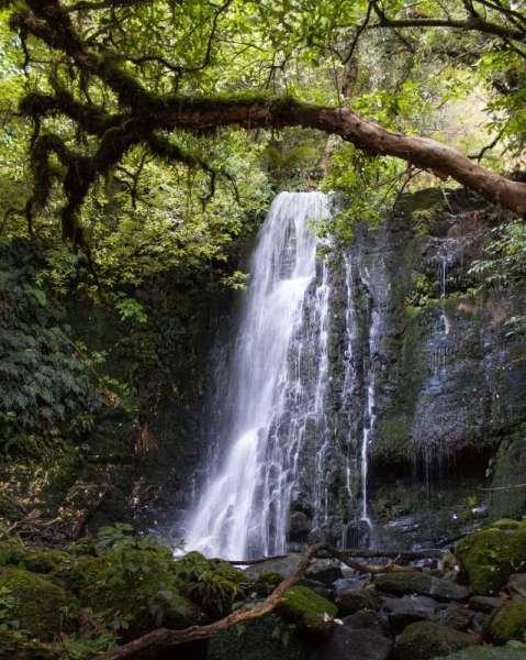 Horseshoe Falls / Matai Falls in den Catlins
