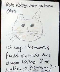 2011-09-20-Katze1