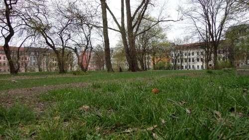 In der Südost-Ecke wächst das Gras