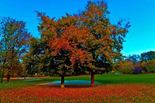 Wenn der Baum in den Farbtopf fällt. - Anklicken zum Vergrößern