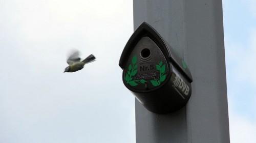 Flugverkehr am Vogelhaus - Foto: DVB