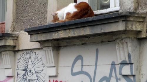 """Im Winter heißt es für Katzen: auf die (Fenster-)Bretter. Darunter ein Werk der """"20 Freaks"""""""