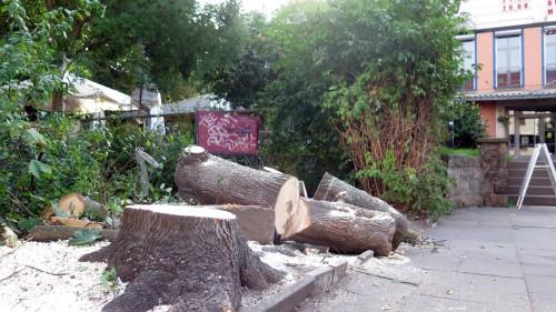 Nur der Stumpf und ein paar Holzstücke künden vom ehemals größten Schattenspender des Platzes.