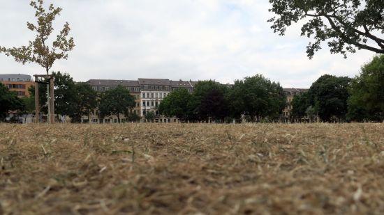 Die einst grüne Wiese sieht aktuell aus wie ein abgemähtes Weizenfeld.