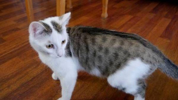 Vermisste Katze