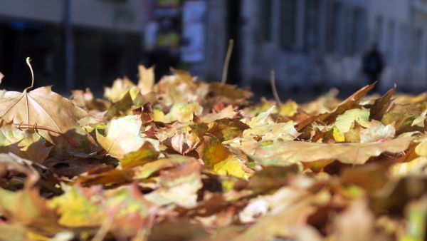 Herbstlaub auf der Pulsnitzer Straße