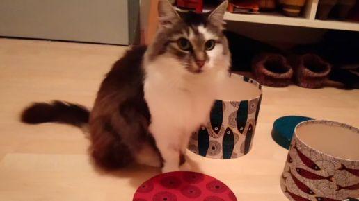 Vermisste Katze Coco