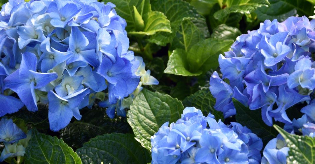 Neutkens Planten en bomencentrum  goede tuinplanten