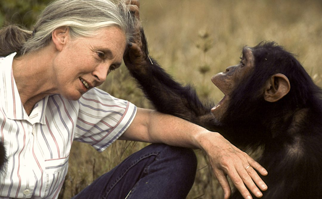 20 Questions with Dr. Jane Goodall : Never Apart
