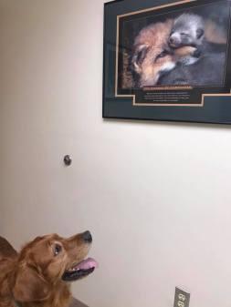 Bean examining inspirational poster