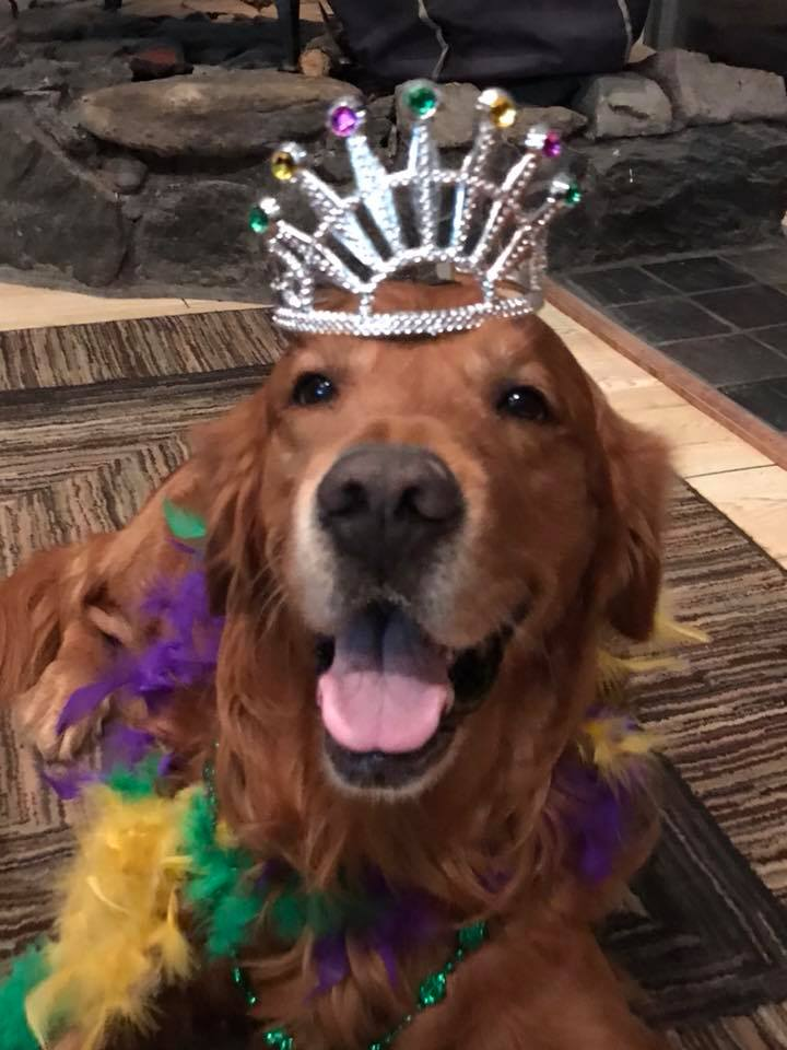 Bean in crown and boa