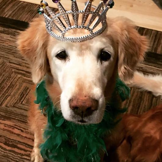 Trooper in crown and green boa