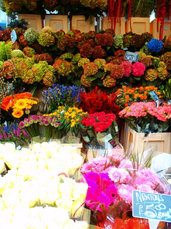 Never Ending Honeymoon | Columbia Road Markets, London, UK