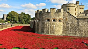 Never Ending Honeymoon | Tower of London Poppies, at home in London, UK