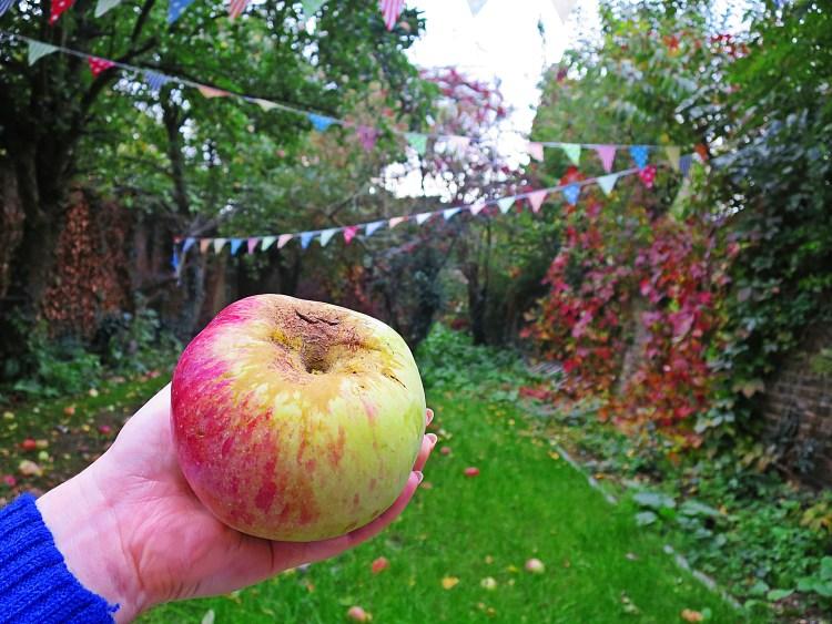 IMG_4222 apples
