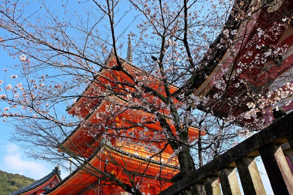 Kyoto Kiyomizu-dera with cherry blossoms