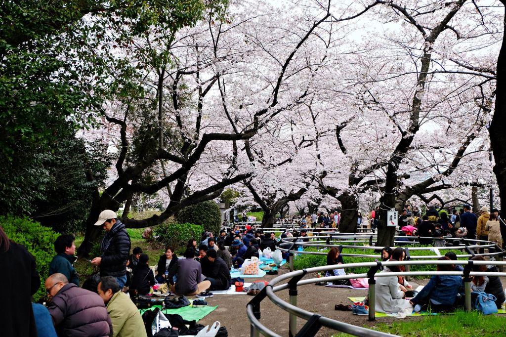 Tokyo Sakura parties March 2016