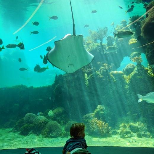 Underwater scene at Daydream Island