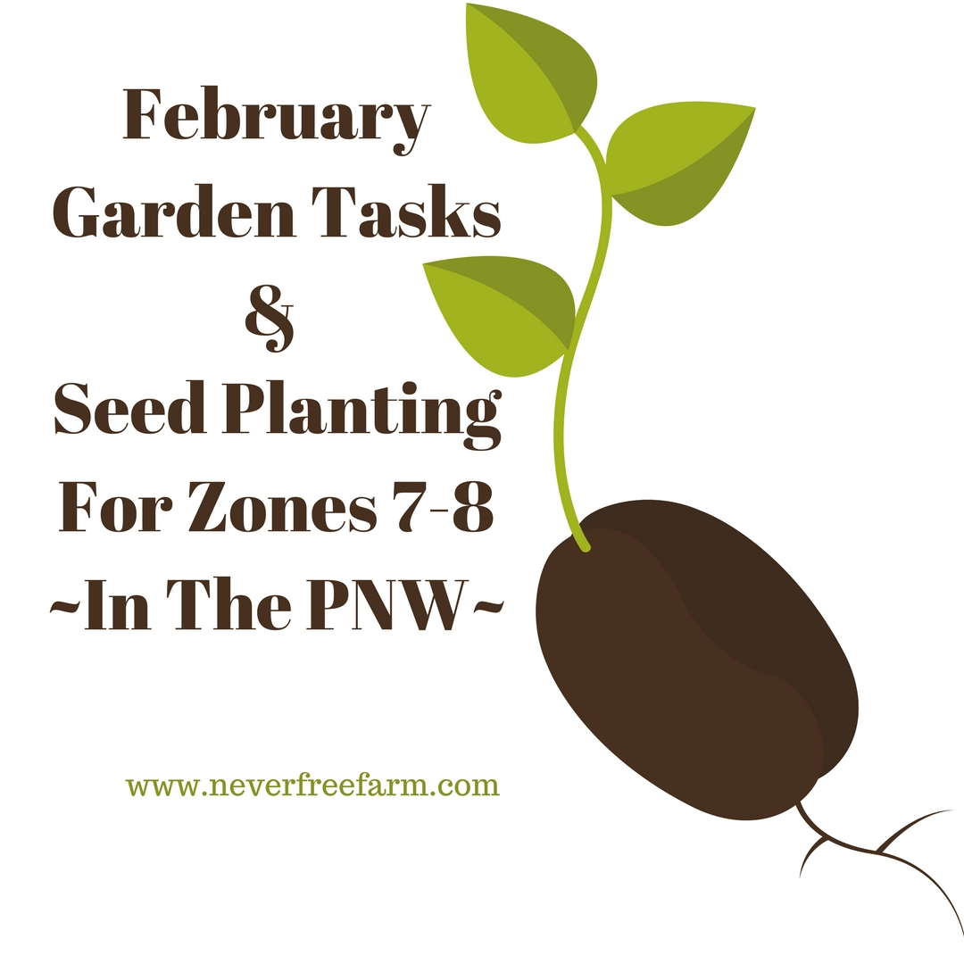 February Garden Tasks and Seed Planting (For Zones 7-8 PNW)