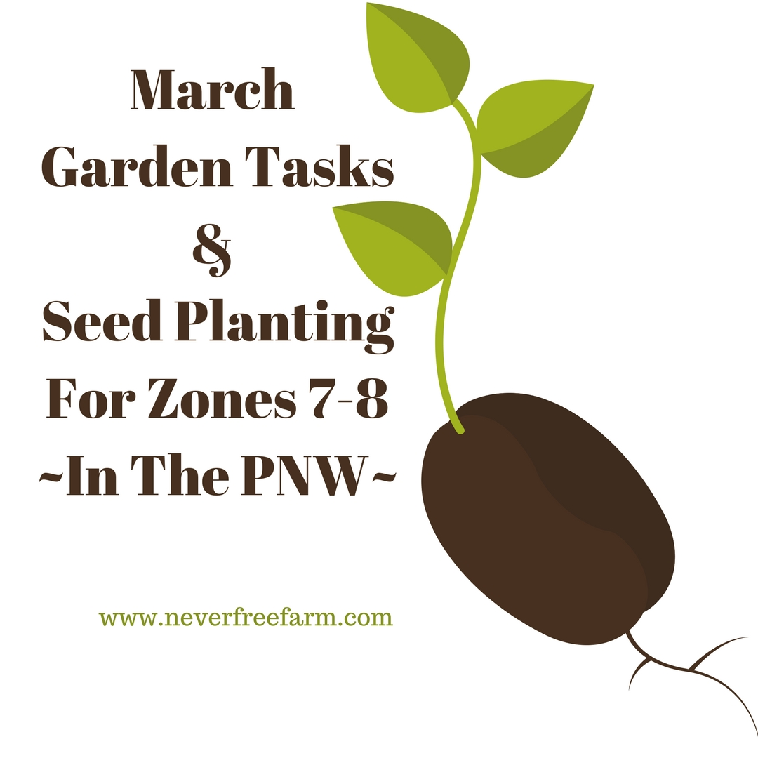 March Garden Tasks and Seed Planting (For Zones 7-8 PNW)
