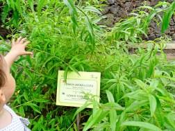 Parque del Drago, Herb Garden