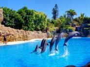 Loro Parque - Dolphin Show