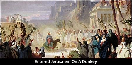 Jesus Entered Jerusalem On A Donkey