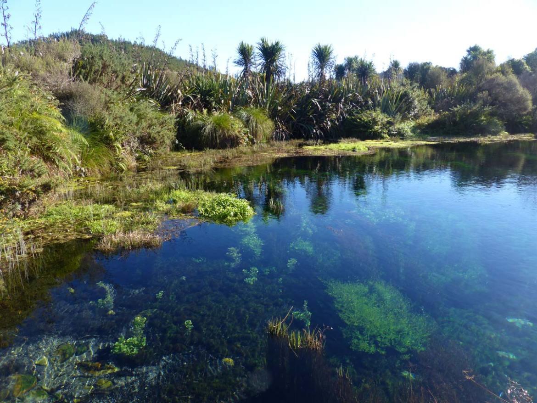 Neuseeland, Südinsel, Takaka, Te Waikoropupu Springs
