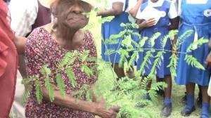 Ismay Sweeney with Plant